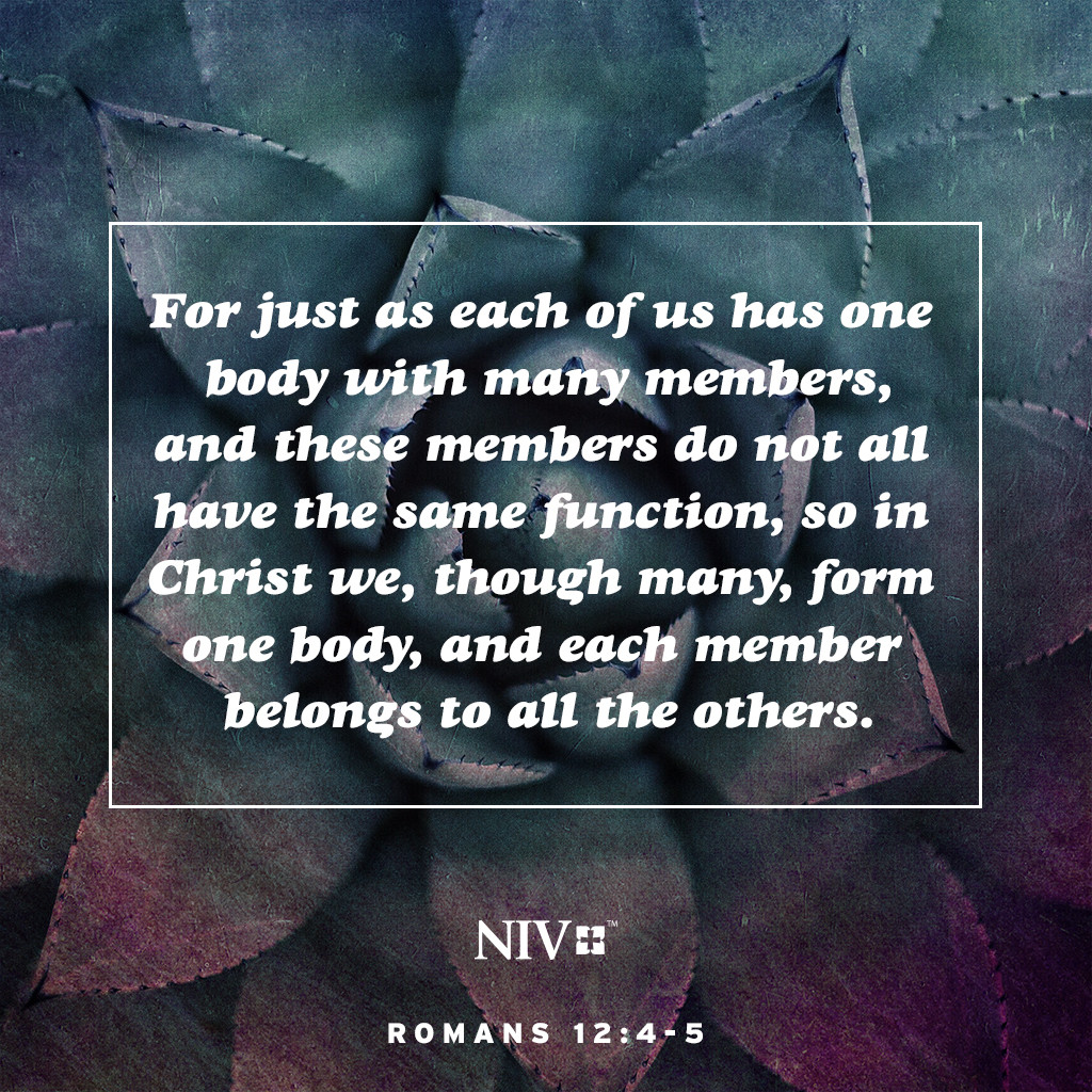 4 For just as each of us has one body with many members, and these members do not all have the same function, 5 so in Christ we, though many, form one body, and each member belongs to all the others. Romans 12:4-5
